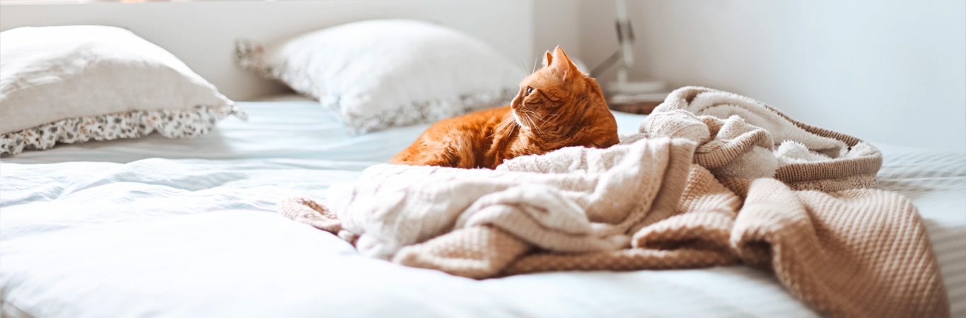 kiwihomestore bedcare